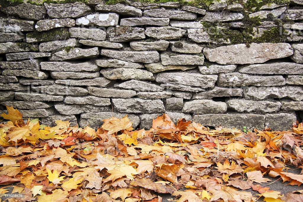 dry stone wall autumn leaves background royalty-free stock photo