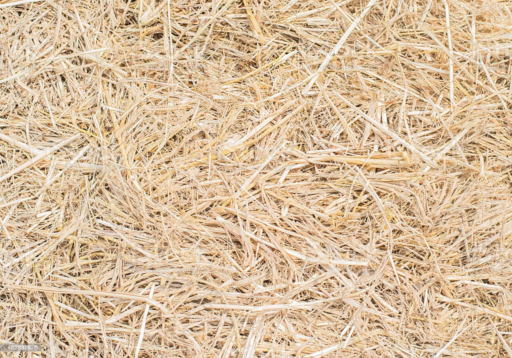 Dry straw Background or Texture stock photo