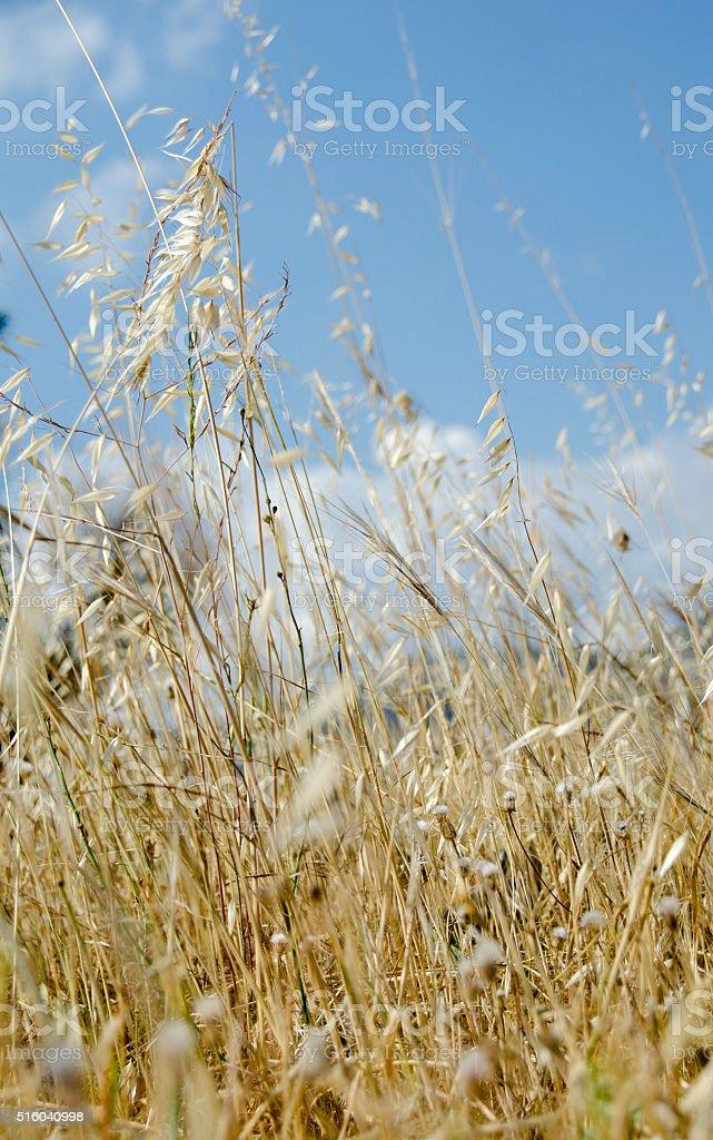 Dry summer plants stock photo