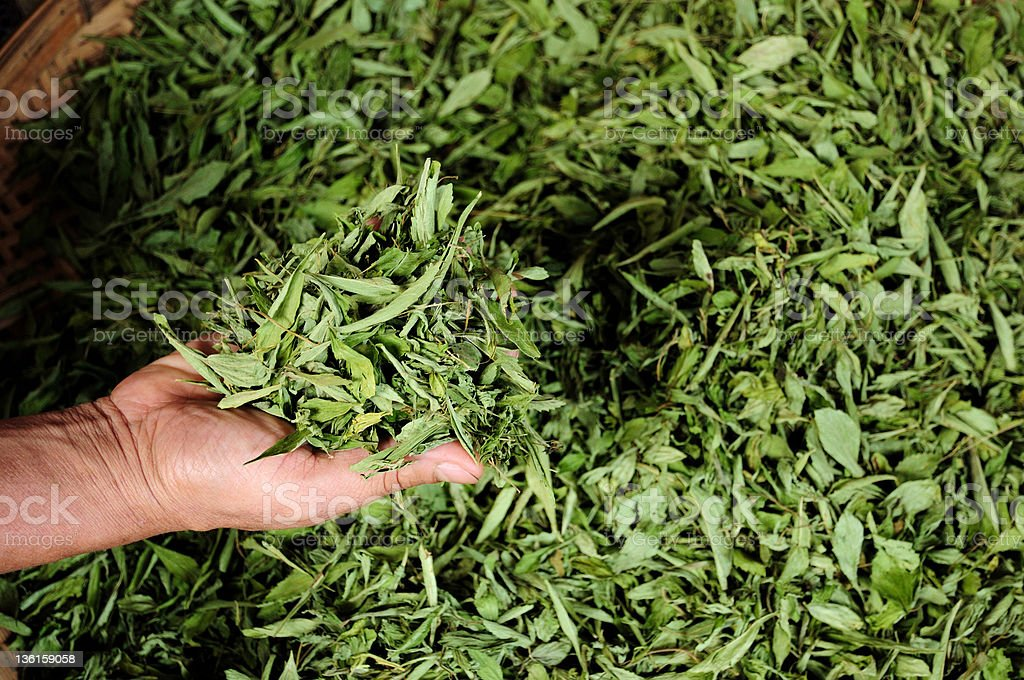 dry tea leaf in the hand royalty-free stock photo