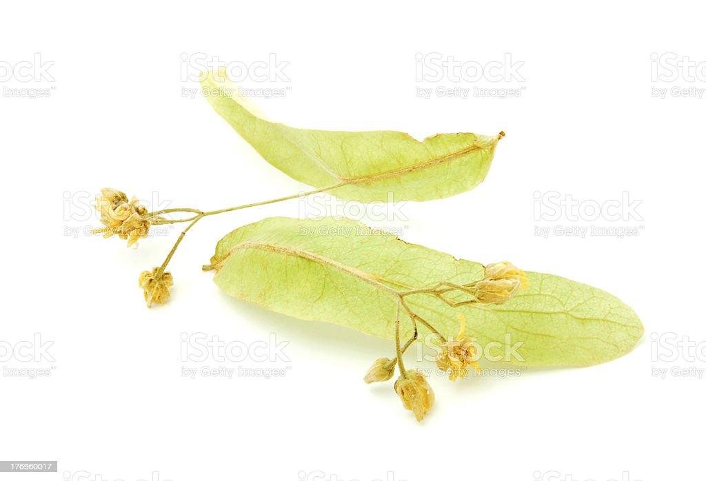 dry tea linden flower royalty-free stock photo