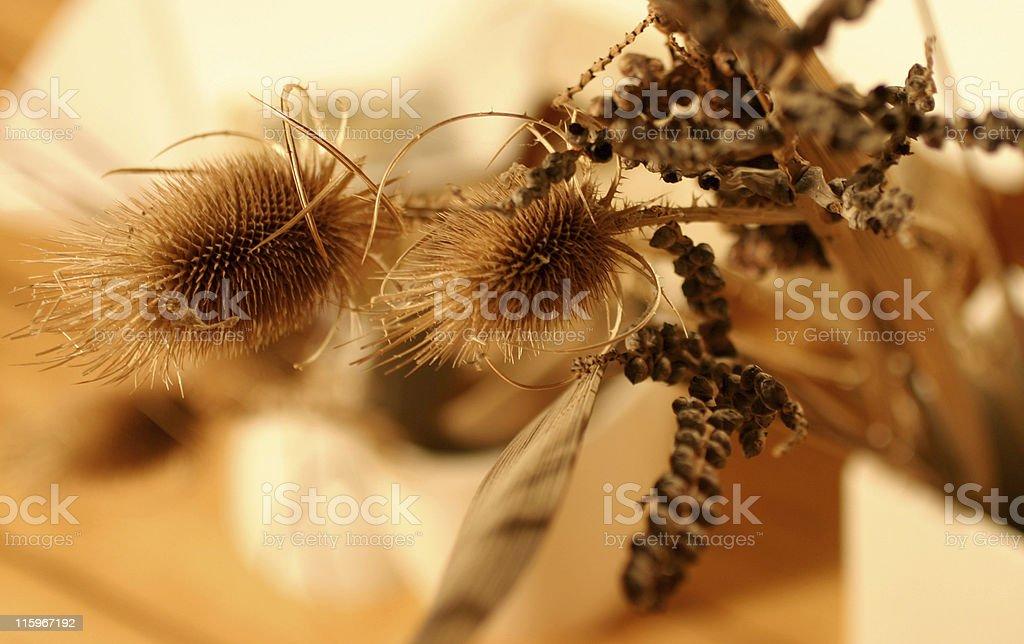 dry thistles stock photo