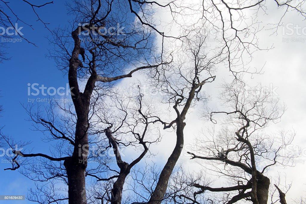 dry tree and sky stock photo