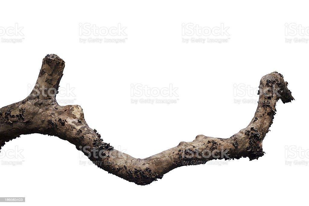 Dry tree branch stock photo