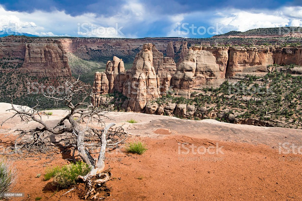 Dry Tree in Colorade National Monument, USA stock photo