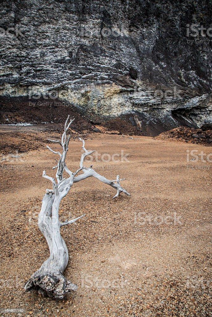 Dry tree in desert landscape stock photo