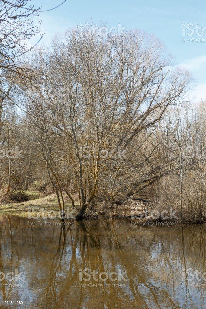 Dry tree near river stock photo