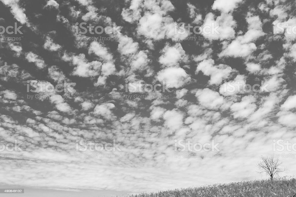 dry tree on the field and beautiful  black and white stock photo