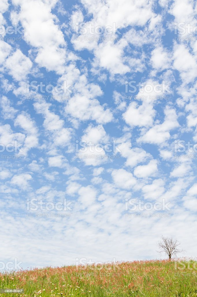 dry tree on the field and beautiful sky stock photo