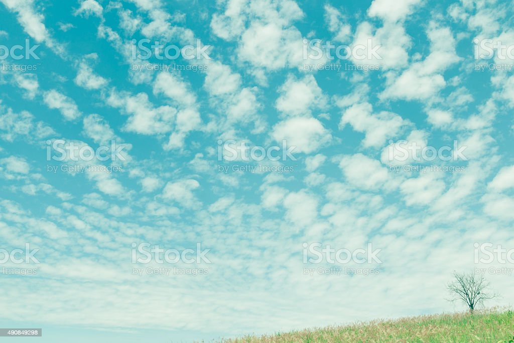 dry tree on the field and beautiful sky, vintage toning stock photo