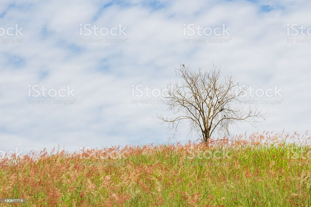 dry tree on the field and sky stock photo