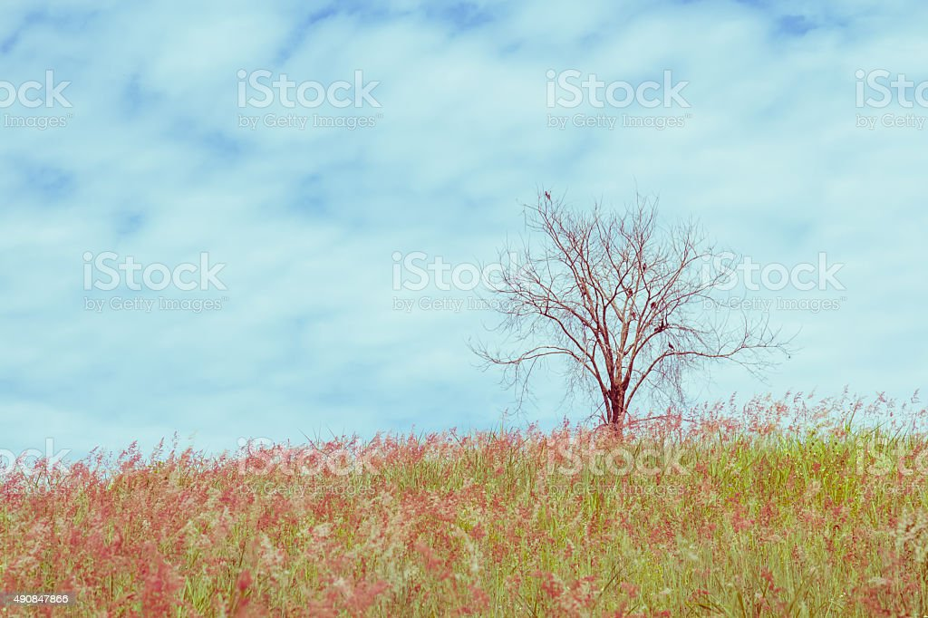dry tree on the field and sky, vintage toning stock photo