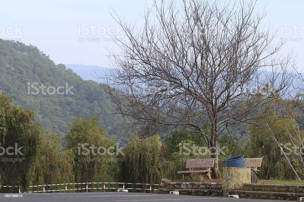 dry tree on the mountain stock photo
