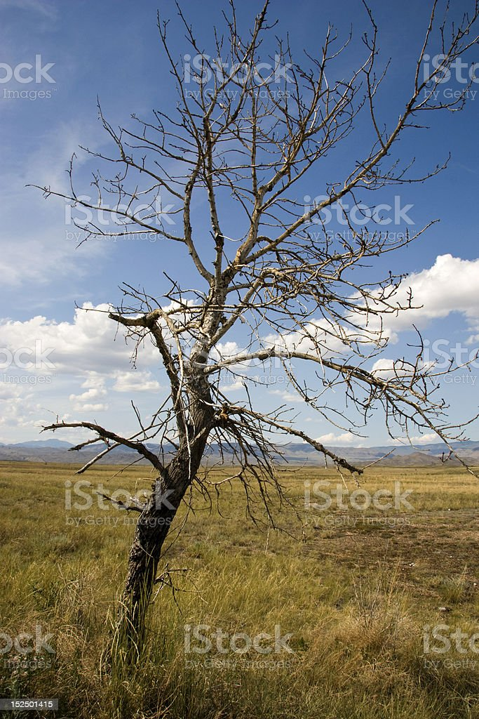 Dry tree. royalty-free stock photo