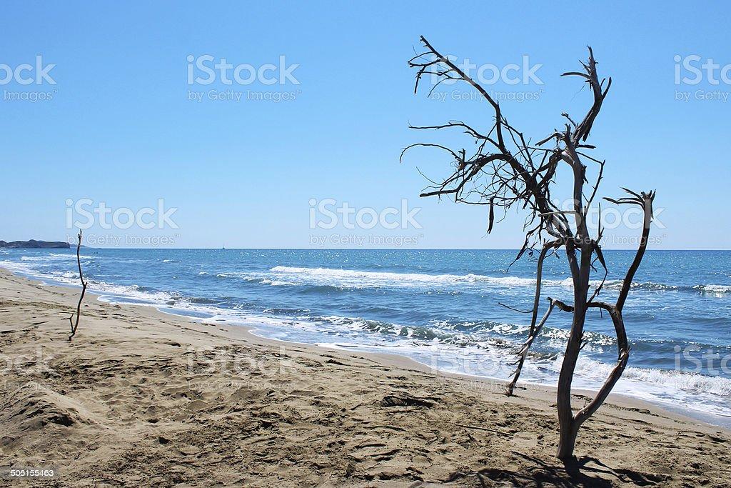 Сухой дерево Стоковые фото Стоковая фотография