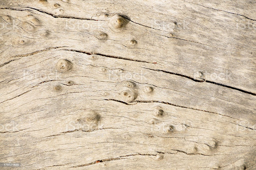 Dry Tree Stump Texture royalty-free stock photo