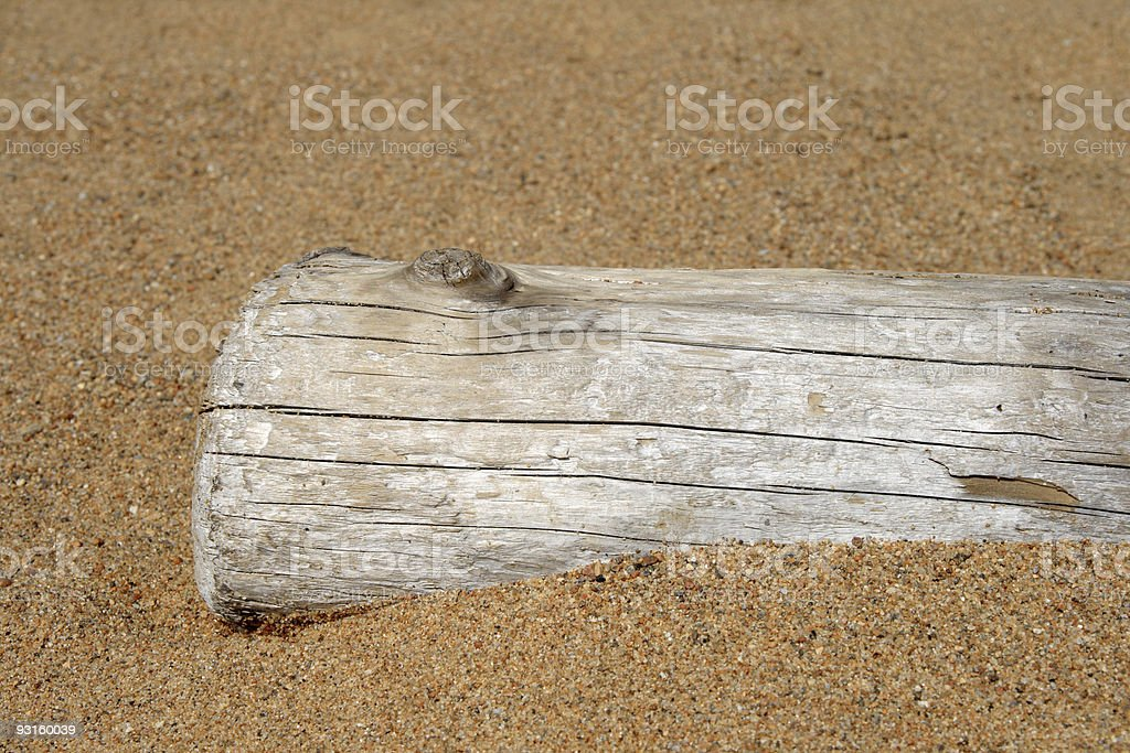 Dry tree trunk in sand royalty-free stock photo