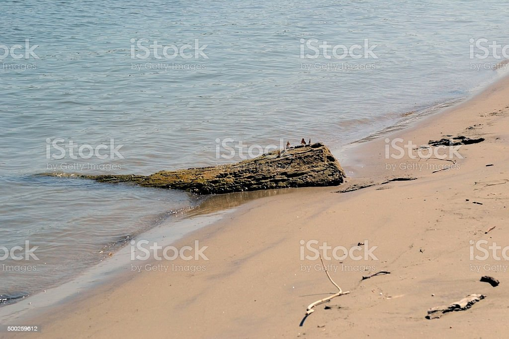 Dry tree trunk in water stock photo