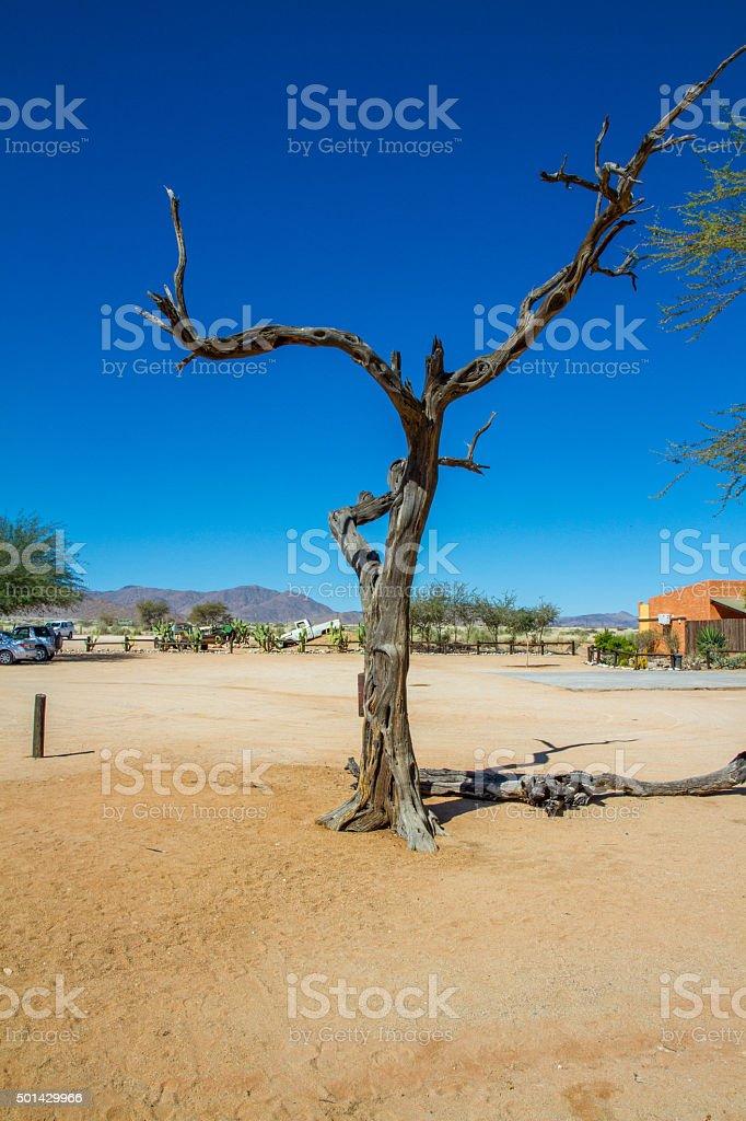Dry Tree Trunk stock photo