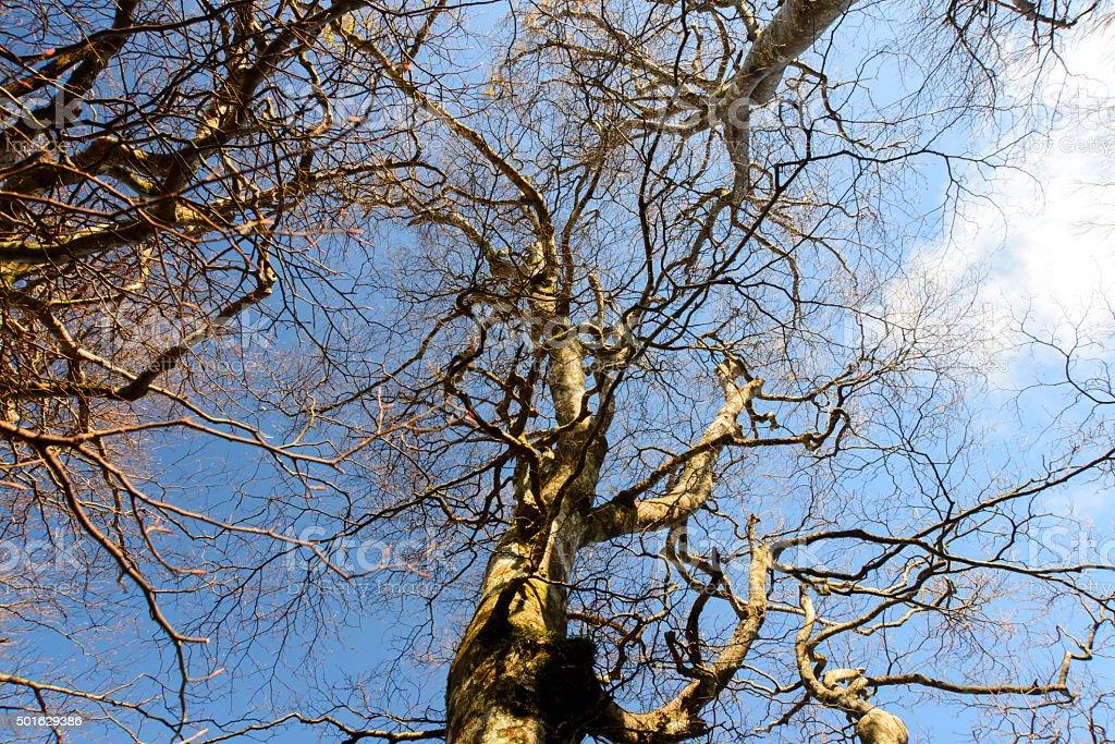 Dry tree under blue sky stock photo