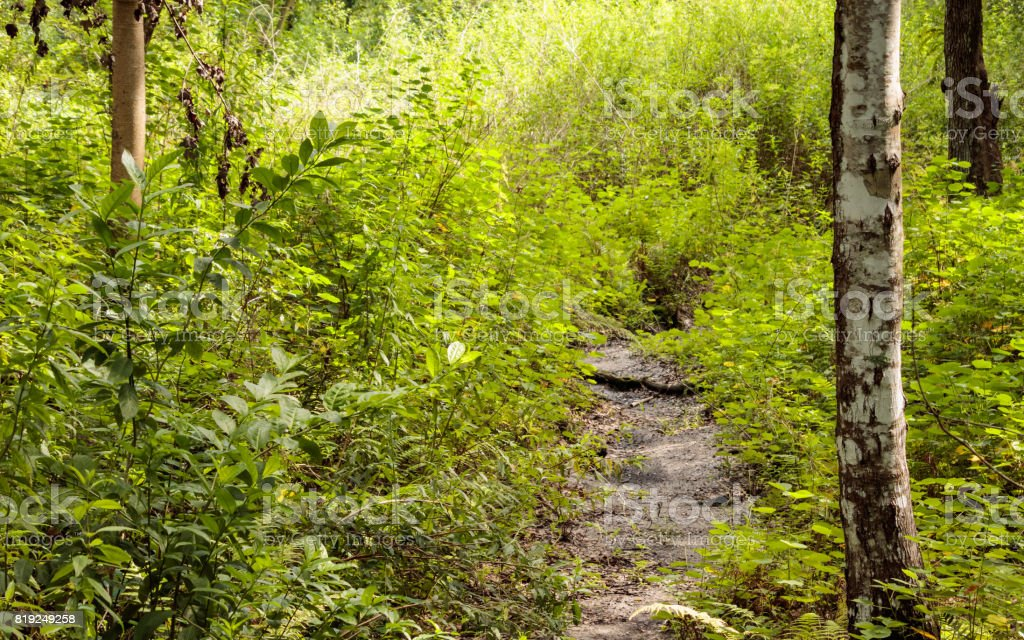 dry trough the stream forest plants and birch trunk in fromt stock photo