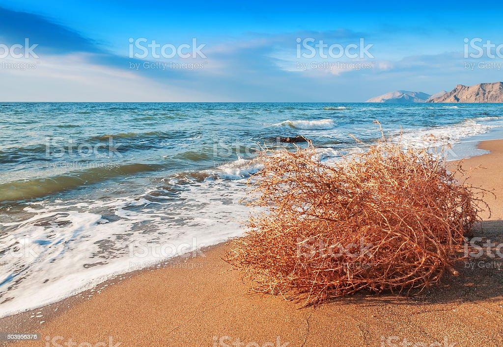 dry tumbleweed on the beach stock photo