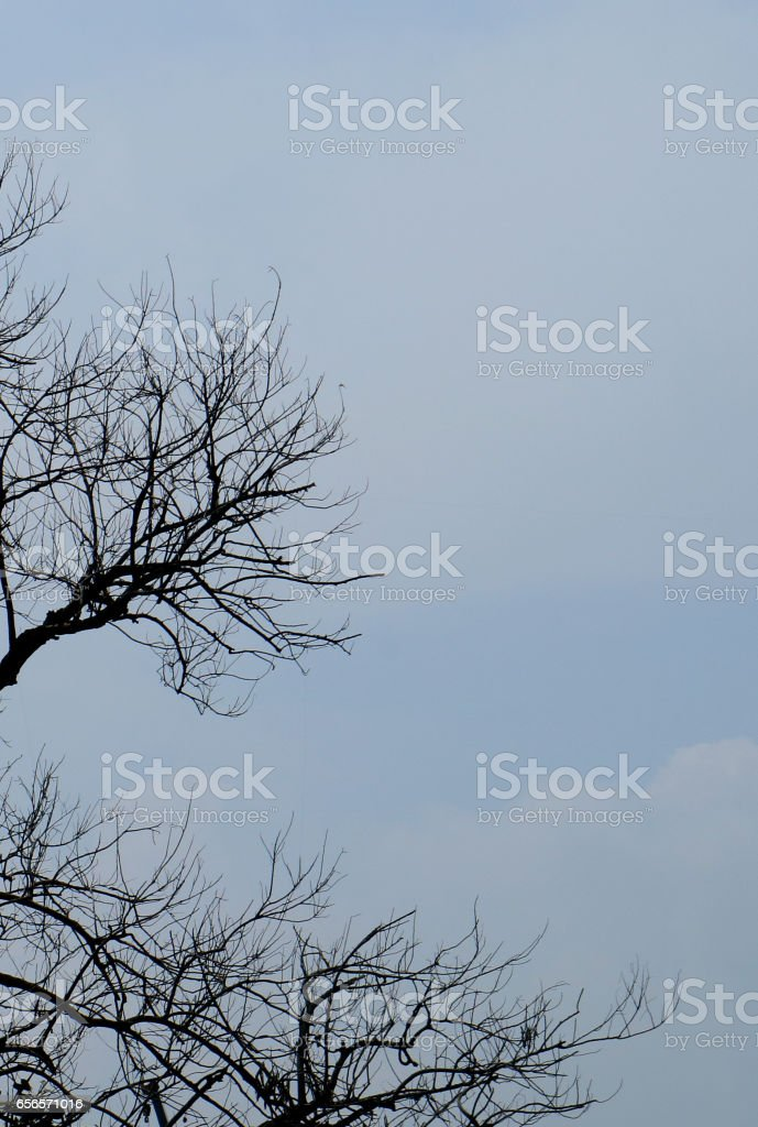 Dry Twigs stock photo