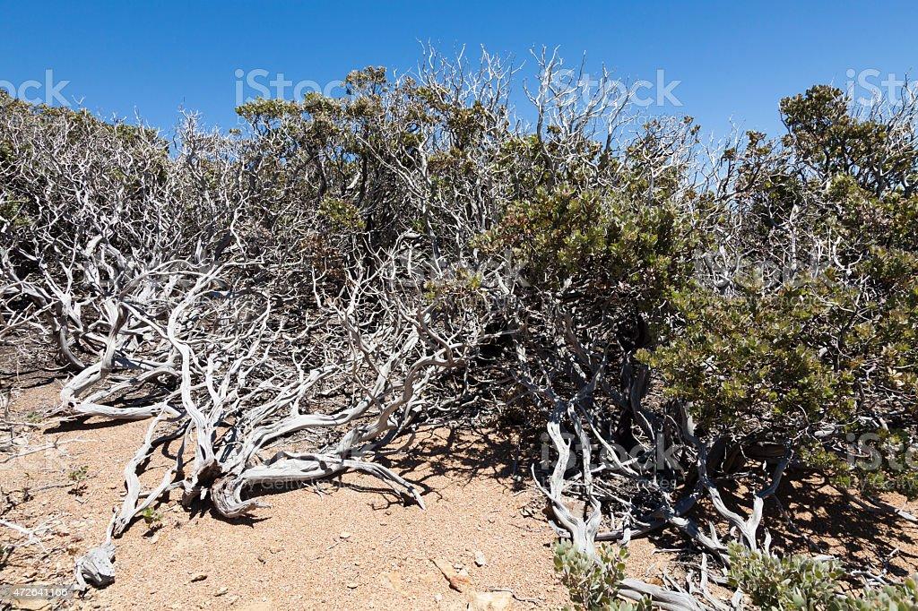 Dry vegetation on Mount Saint Helena in California. stock photo