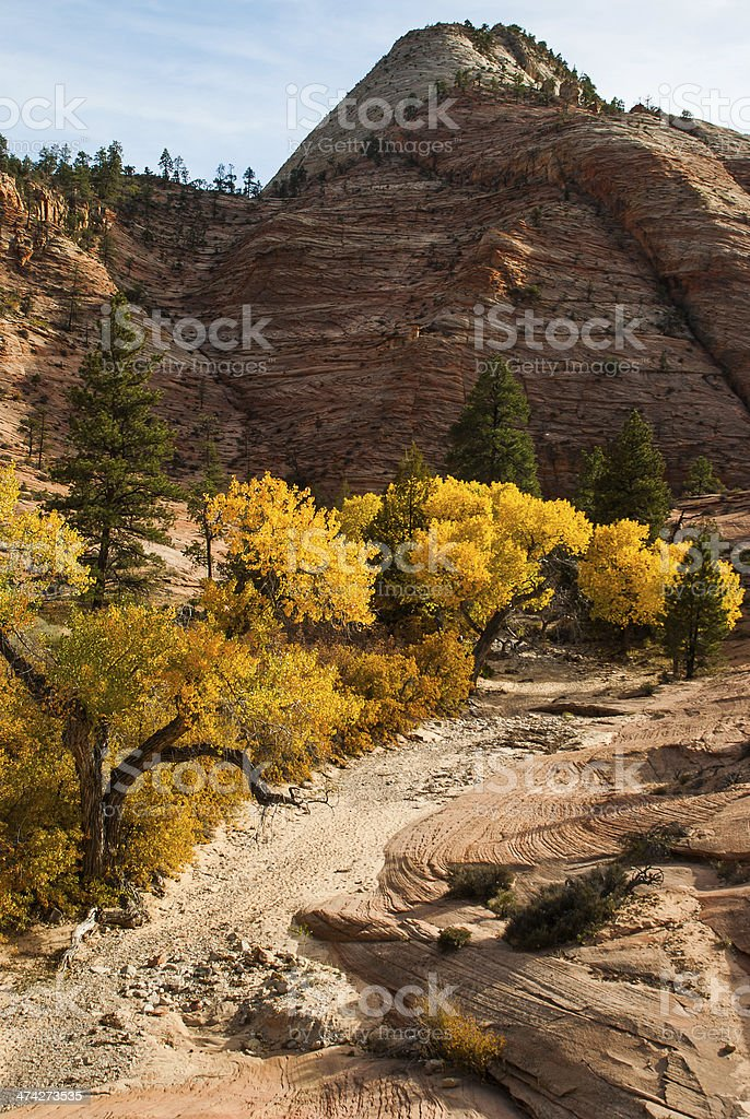 Dry Wash Cottonwoods and Sandstone Rocks Zion National Park Utah stock photo