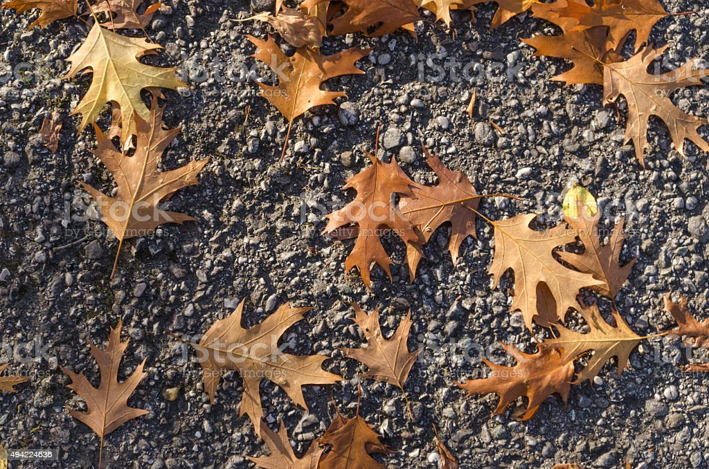Dry weathered leaves lying on the street in autumn stock photo