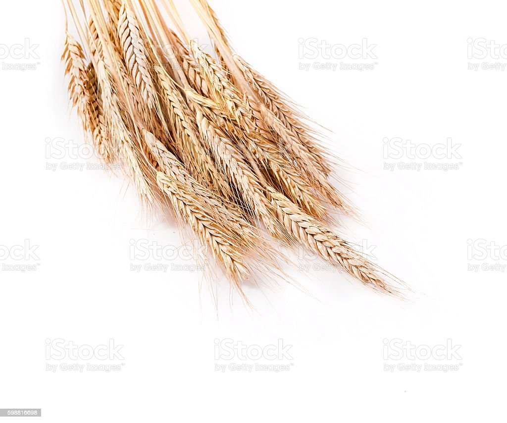 Dry wheat ears stock photo
