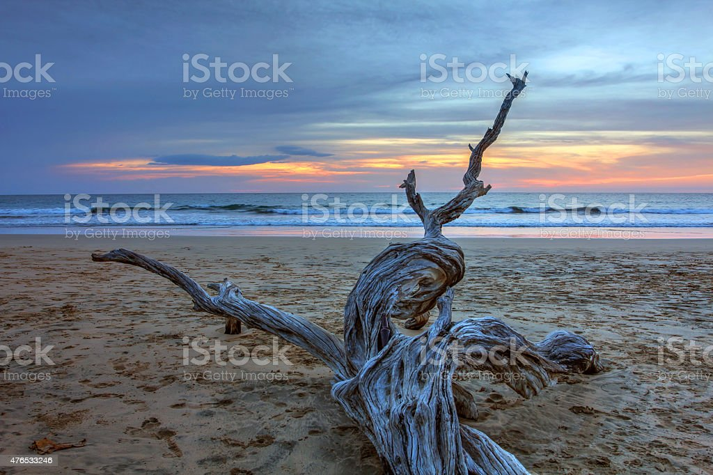 Dry wood at Playa Avallena, Costa Rica stock photo