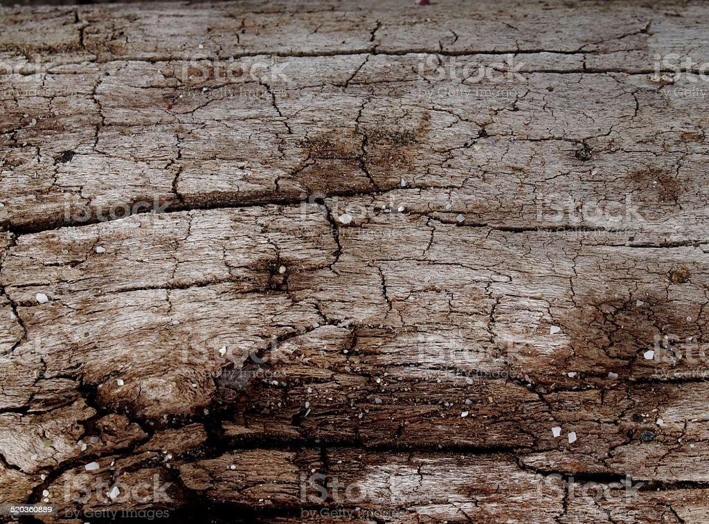 Dry wood on the beach, puerto cayo, ecuador stock photo