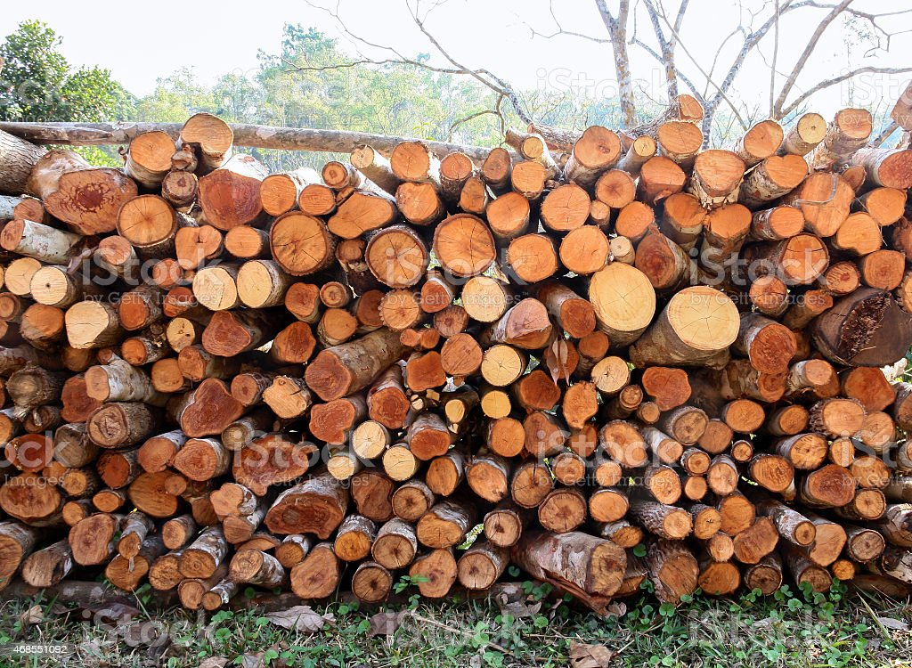 Dry woodpile with different shape royalty-free stock photo