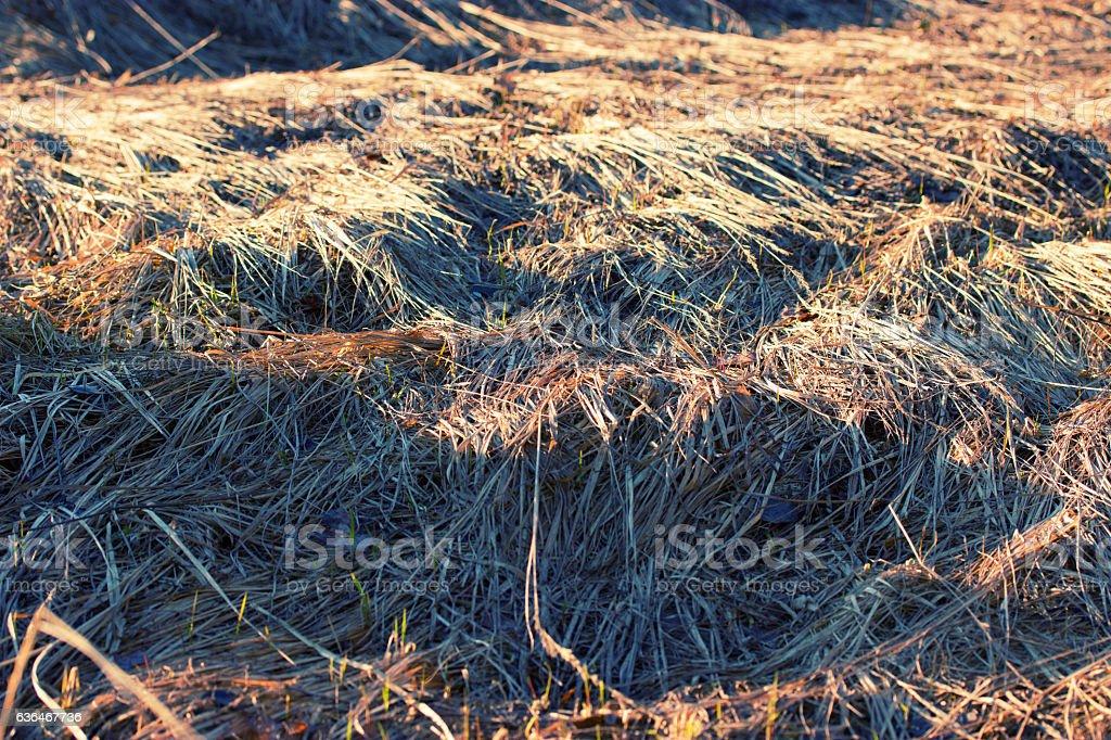 dry yellow grass stock photo