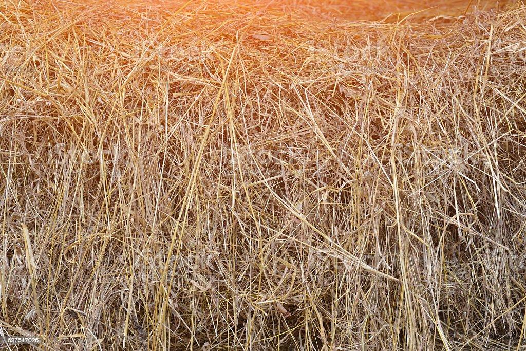 dry yellow hay, grass Background. stock photo