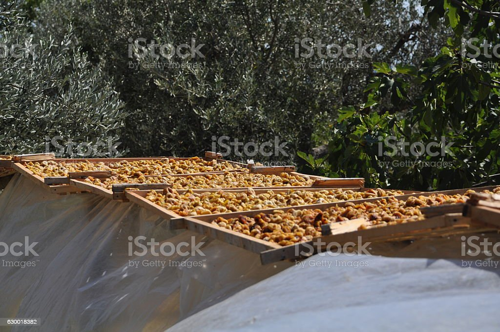 Drying figs stock photo