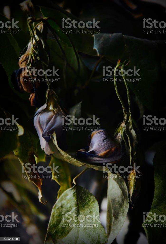 Drying flowers stock photo