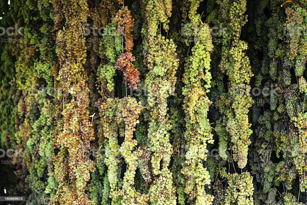 Drying Grapes for vin santo wine stock photo