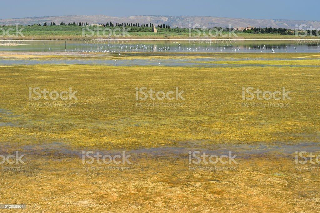Drying lake in Sicily national park where still live birds stock photo