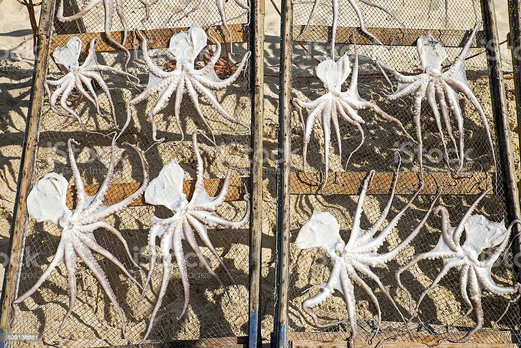 Drying octopus in Portugal stock photo