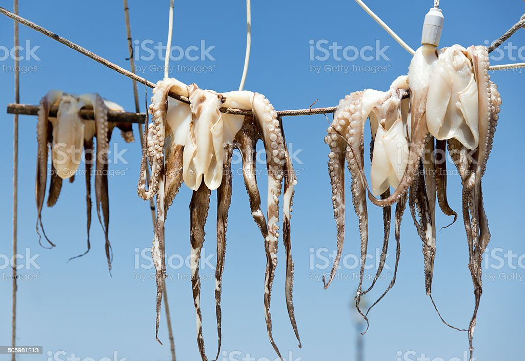 drying octopus royalty-free stock photo