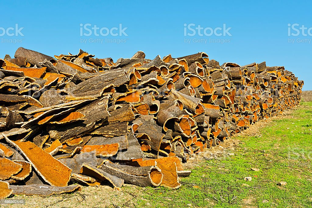 Drying of Corkwood stock photo