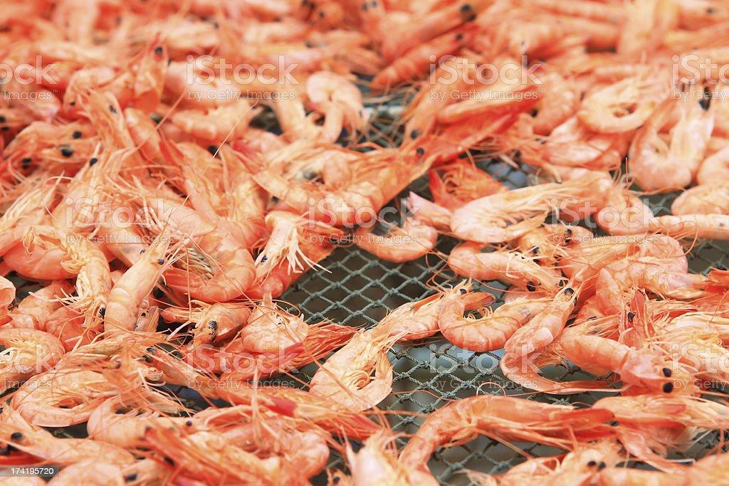 Drying Shrimps royalty-free stock photo