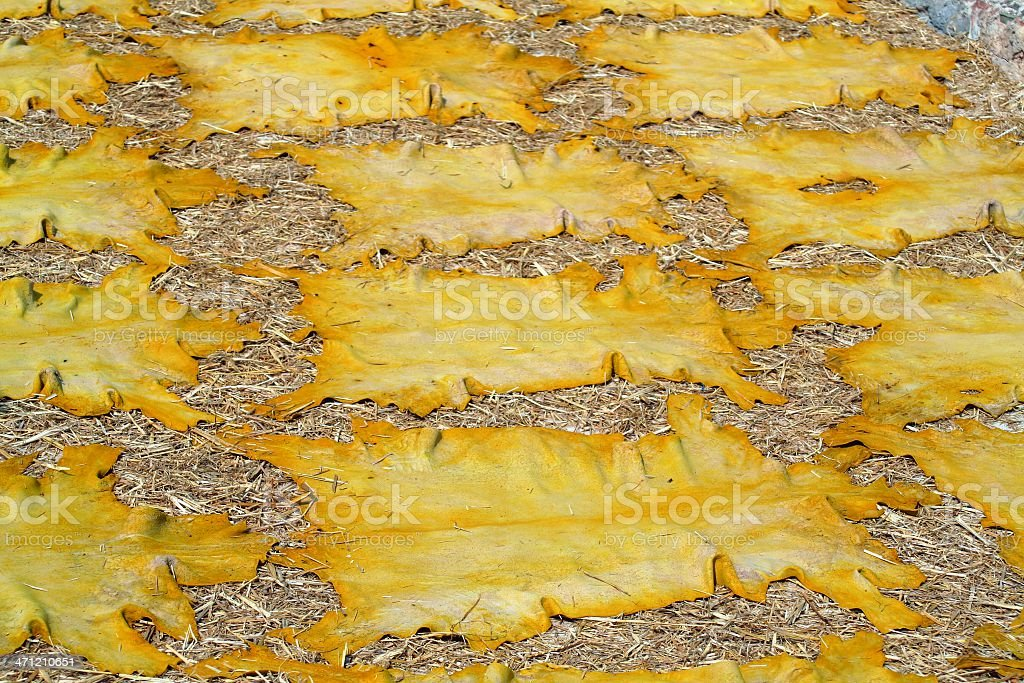 Drying skins royalty-free stock photo