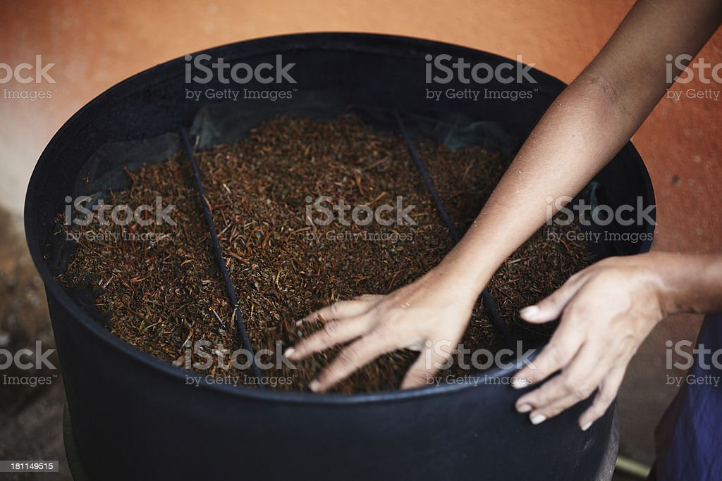 Drying tea leaves at Ceylon royalty-free stock photo