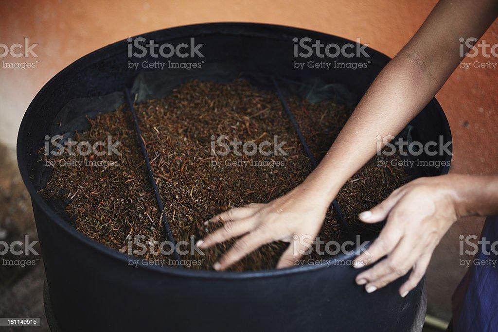 Drying tea leaves at Ceylon stock photo
