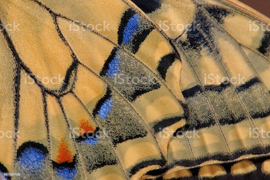 Détail de l'aile du papillon Machaon stock photo