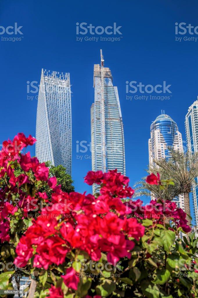 Dubai Marina with flowers against skyscrapers in Dubai, United Arab Emirates stock photo