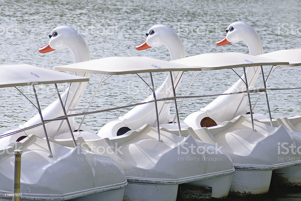 duck boat stock photo